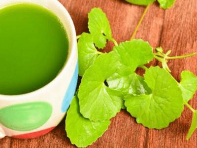 manfaat daun pegagan, obat herbal amandel, radang amandel